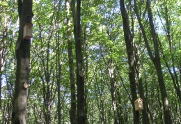 Шпаківень забагато не буває, всі дерева повздовж алейки заповнені домівками для пташок